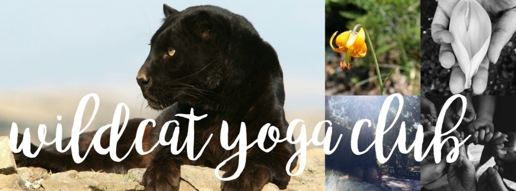 The Wildcat Yoga Club is an online space for practice, study and connection